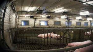 griseløftet brennpunkt-dokumentaren